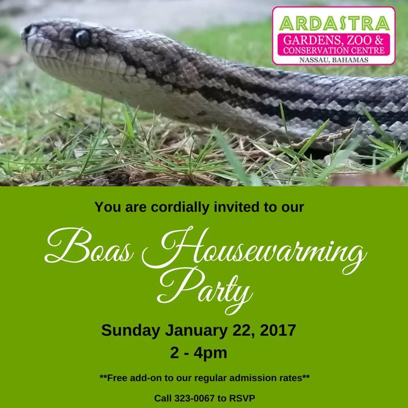 Boas Housewarming Party at Ardastra Gardens