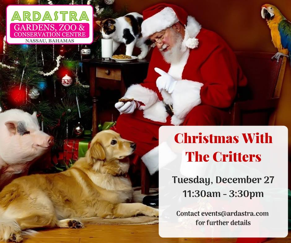 Christmas With The Critters at Ardastra Gardens, Zoo and Conservation Centre