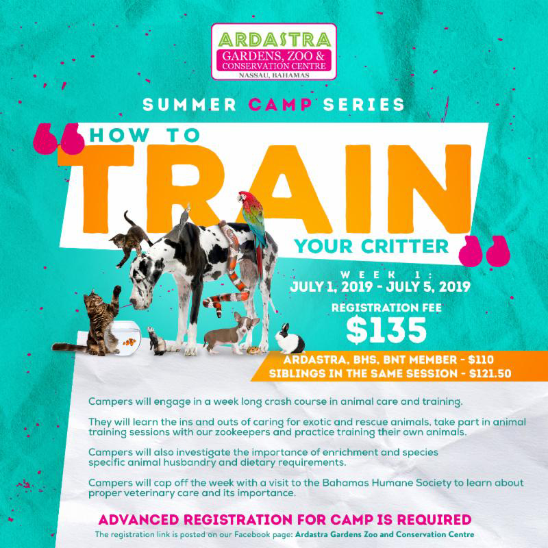Ardastra Summer Camp Season Presents How To Train Your Critter