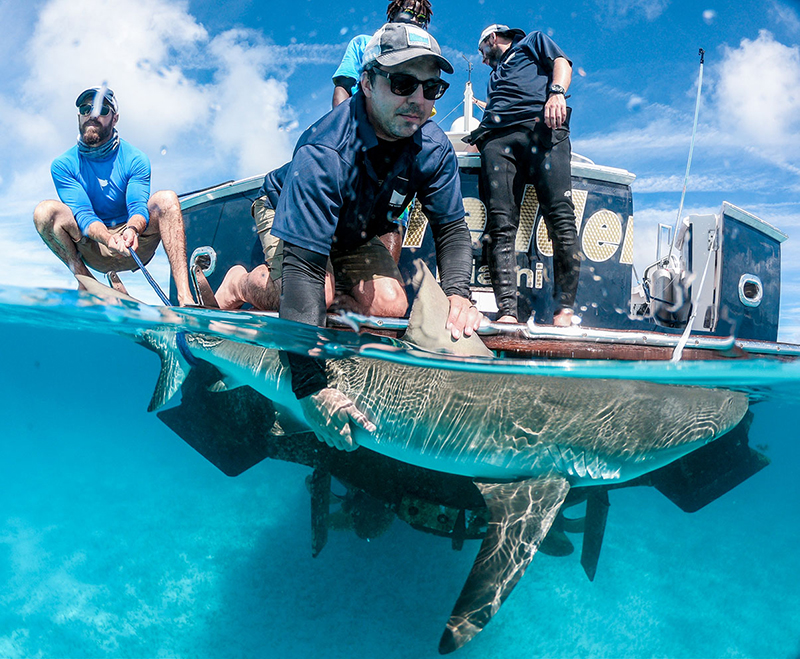 Dr. Austin Gallagher stops for a quick photo as he tags a reef shark in The Bahamas.