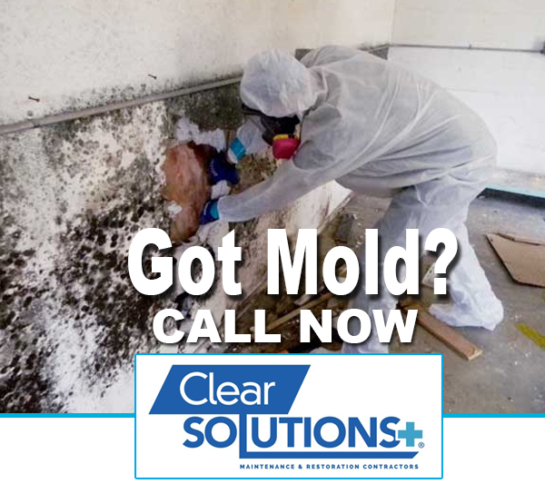 Got Mold? Call Clear Solutions Plus