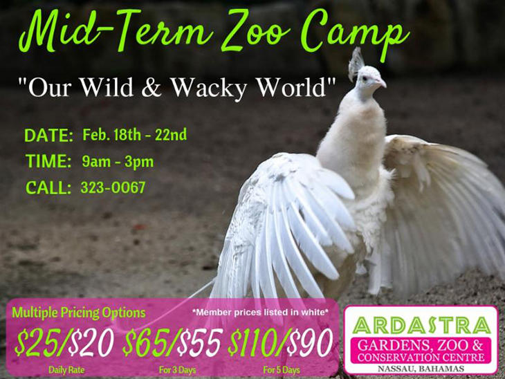 Mid Term Camp At Ardastra Gardens