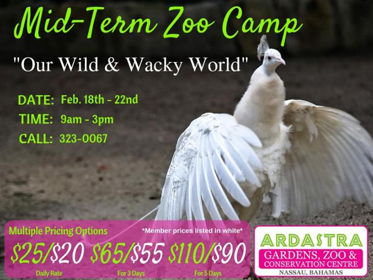 Mid Term Camp At Ardastra Gardens