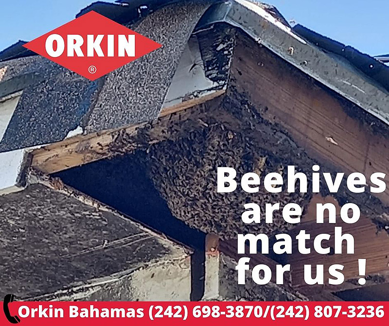 Orkin Bahamas Bee Hives are no match for us!!