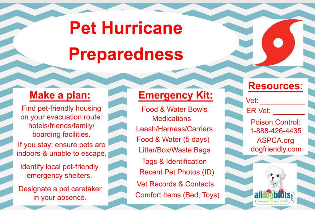 Pet Hurricane Preparedness