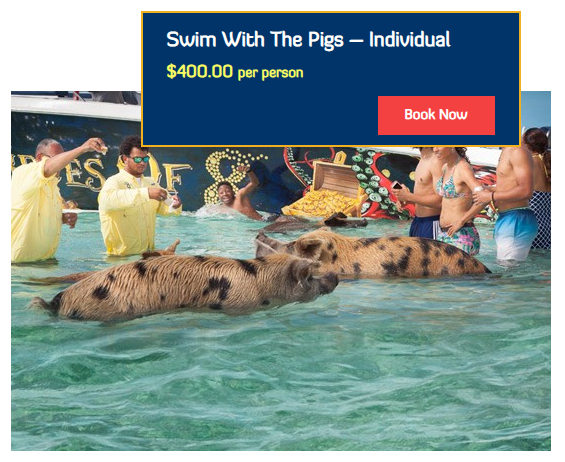 Swim With The Pigs – Individual