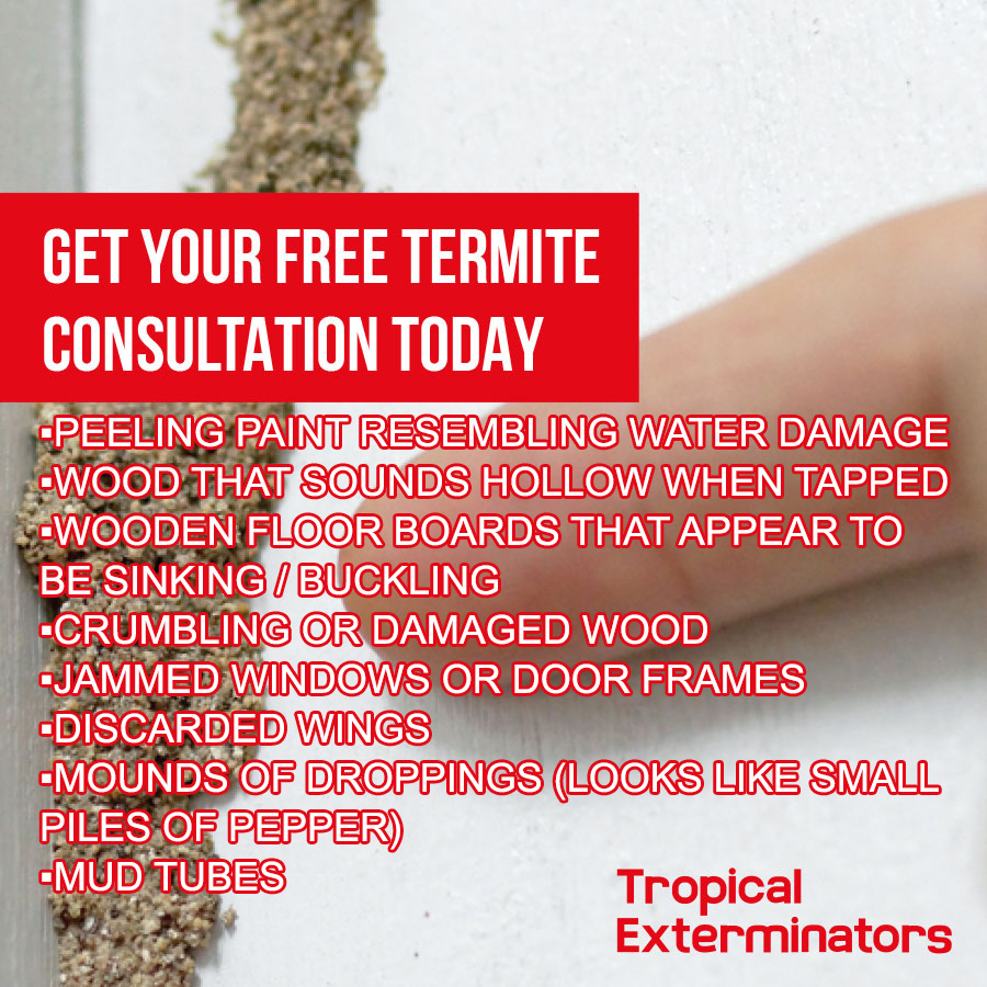 Tropical Exterminators | We offer FREE termite assessments - no obligation.
