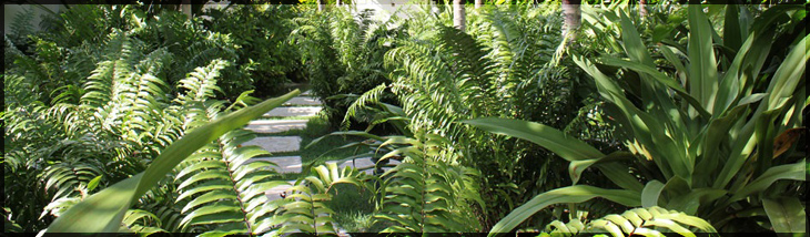 Click Here To See Tropics Landscaping Company Image Gallery