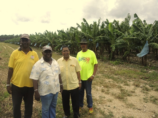 agriculture in the bahamas Food self-sufficiency for the bahamas is an illusion the fact is that ever since the failure of the loyalist plantations, large-scale agriculture has never worked here, despite brief.