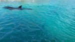 52-Year Old Dolphin Gives Birth at Blue Lagoon Island