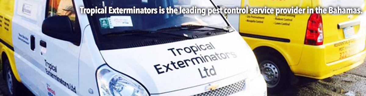 Tropical Exterminators