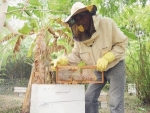 Bahamian stung by passion for bees