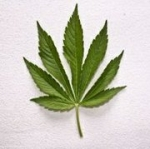 Marijuana move could take years
