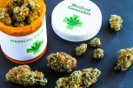 Just what the doctor ordered - poll gives support for medical marijuana
