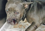'Police shot dogs tied up in yard'